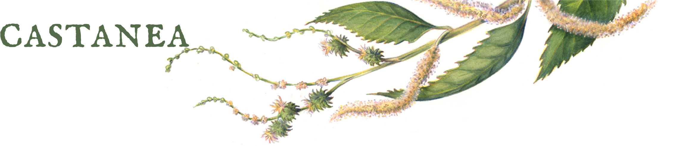 Chestnut Herbal School
