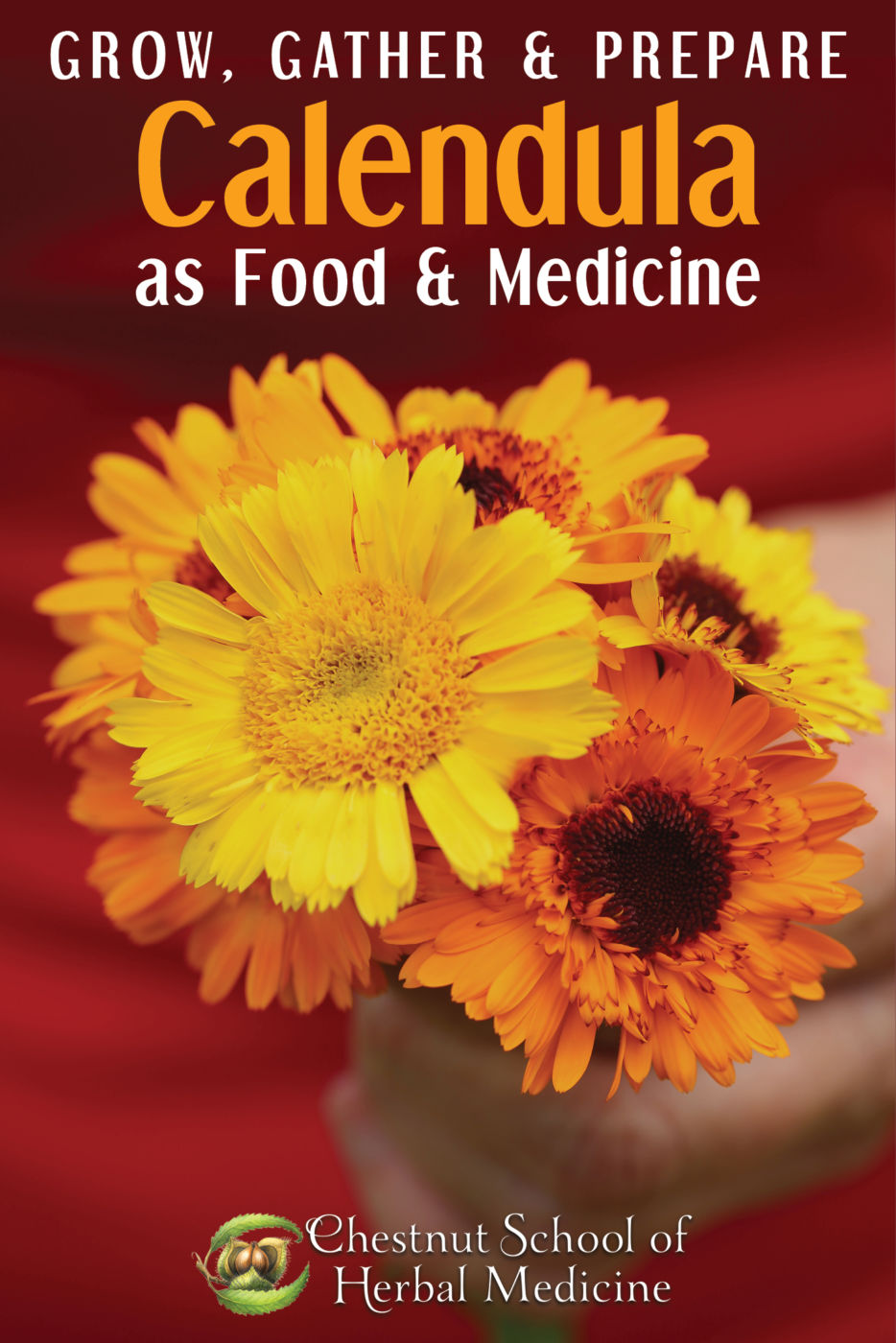 Calendula's Herbal & Edible Uses- How to Grow, Gather, and Prepare Calendula as Food and Medicine