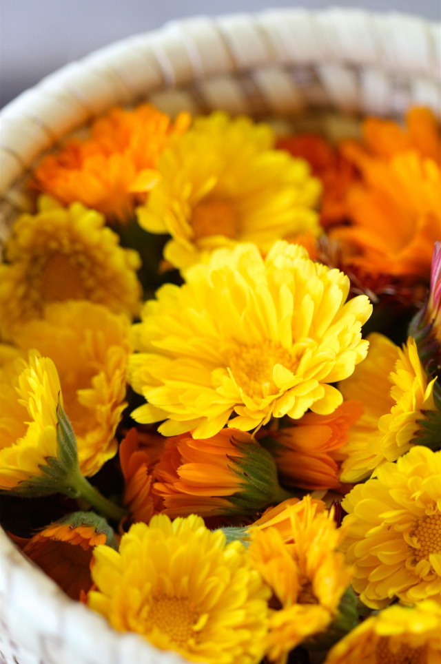 Calendula officinalis-edible flowers