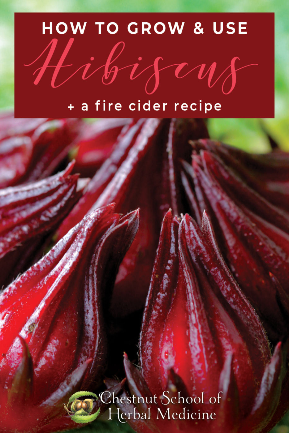 How to Grow & Use Hibiscus Plus a Fire Cider Recipe