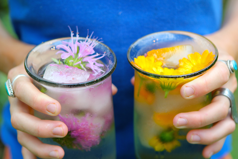 Schisandra ice cubes with edible calendula and wild bergamot flowers