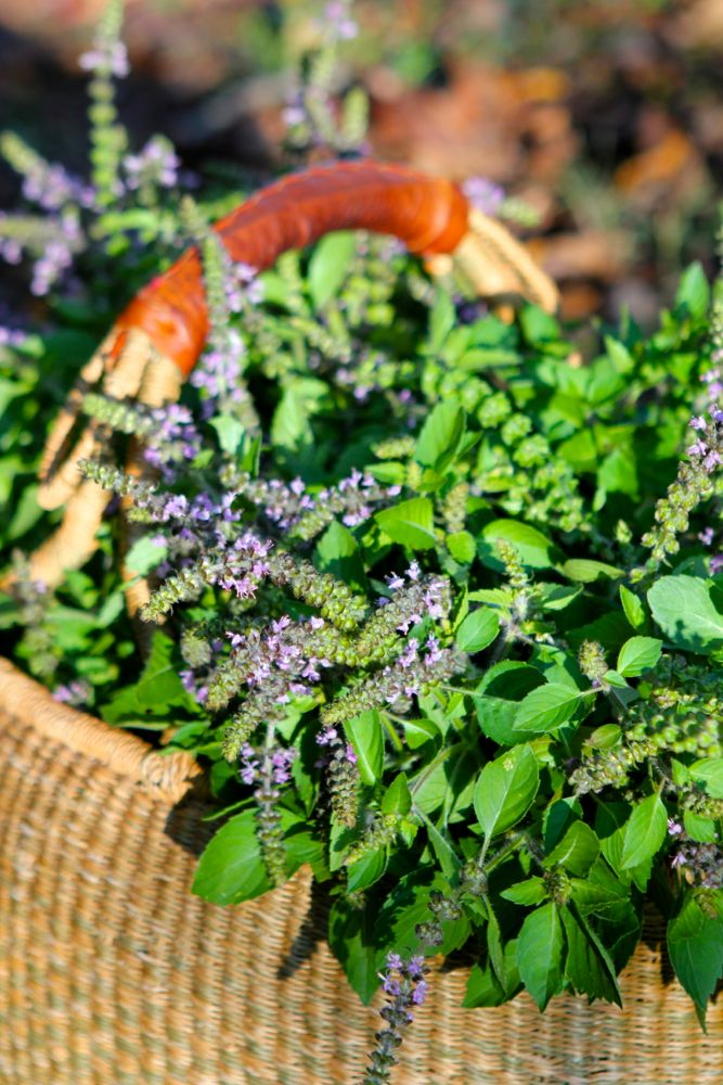 10 Medicinal Herbs for the Garden | Chestnut School of