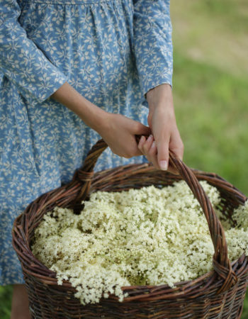 Full-Page-Image-Elderflower-harvest-667x1000
