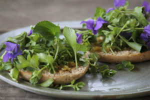Violet-and-chickweed-on-a-bagel-with-red-moses-sauce-1000x667 (1)
