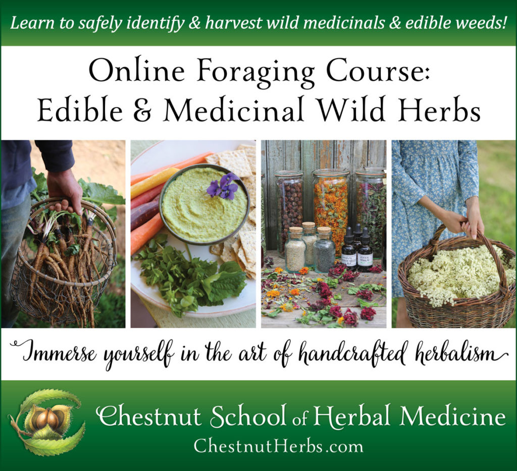 Sign up here for free tutorials (videos + articles) on foraging and herbal  medicine, and to be notified when enrollment opens again in 2019.