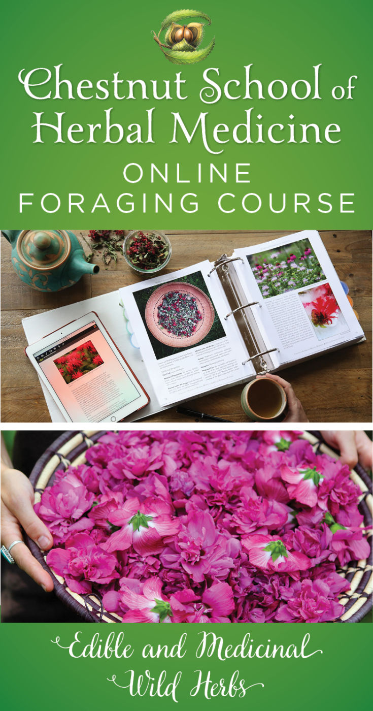 Online Foraging Course