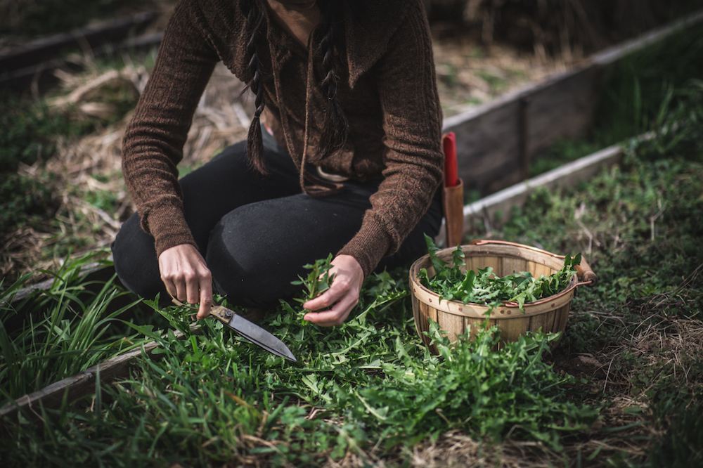 foraging with scissors