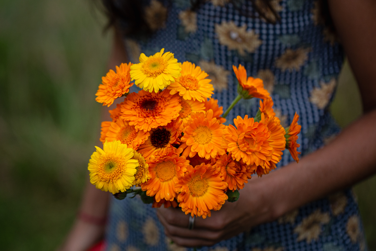 A fresh bouquet of calendula (Calendula officinalis)