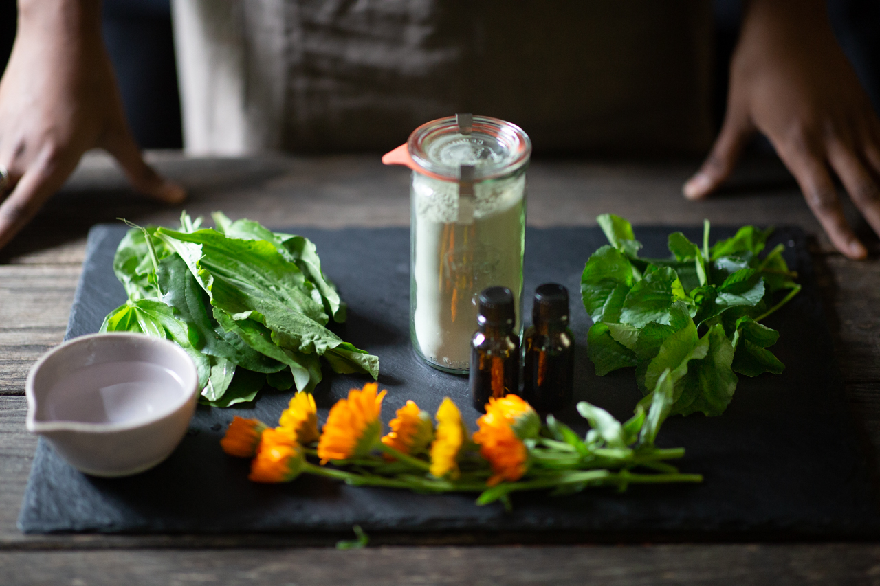 Ingredients for a soothing herbal poultice: calendula flowers, plantain, violet leaves, clay, water, and essential oils