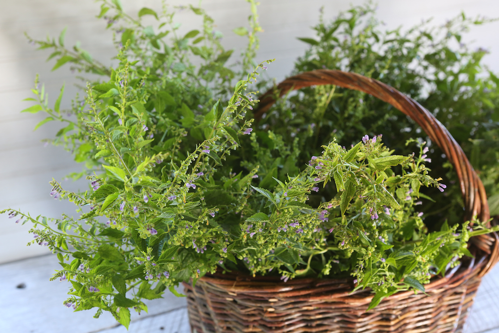 Tonic Herbs for Stress and Anxiety | Chestnut School of