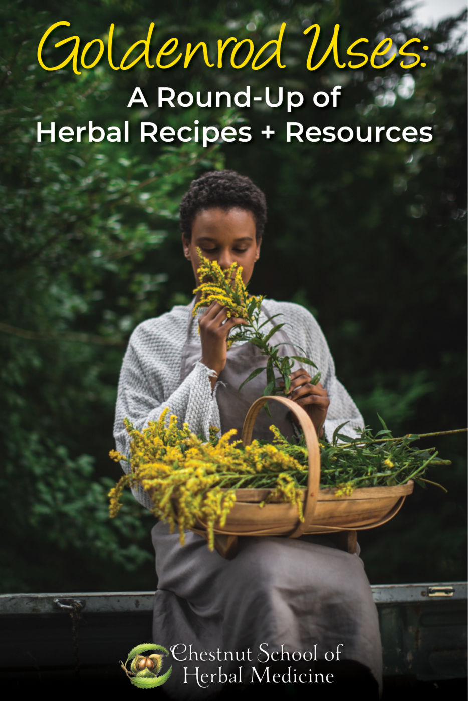 Goldenrod Uses: A Round-Up of Herbal Recipes + Resources