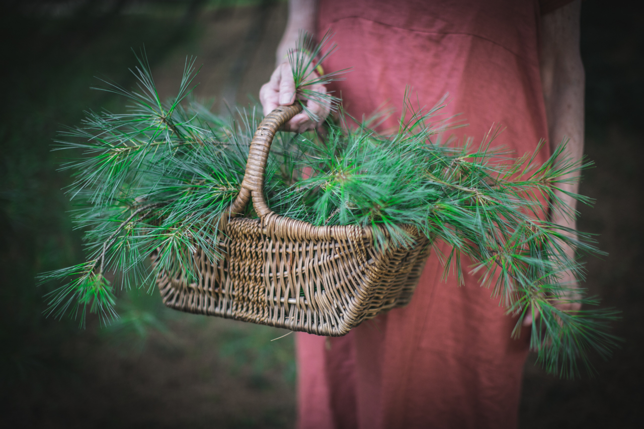 Freshly harvested pine needles in a basket